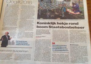161203-web_koningshek_artikel_algemeen_dagblad_amersfoort_staatsbosbeheer_margot_berkman_sierhek_koningshek_